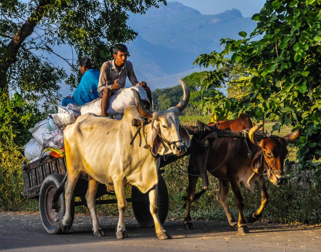 Paal Konow viser bilder fra India