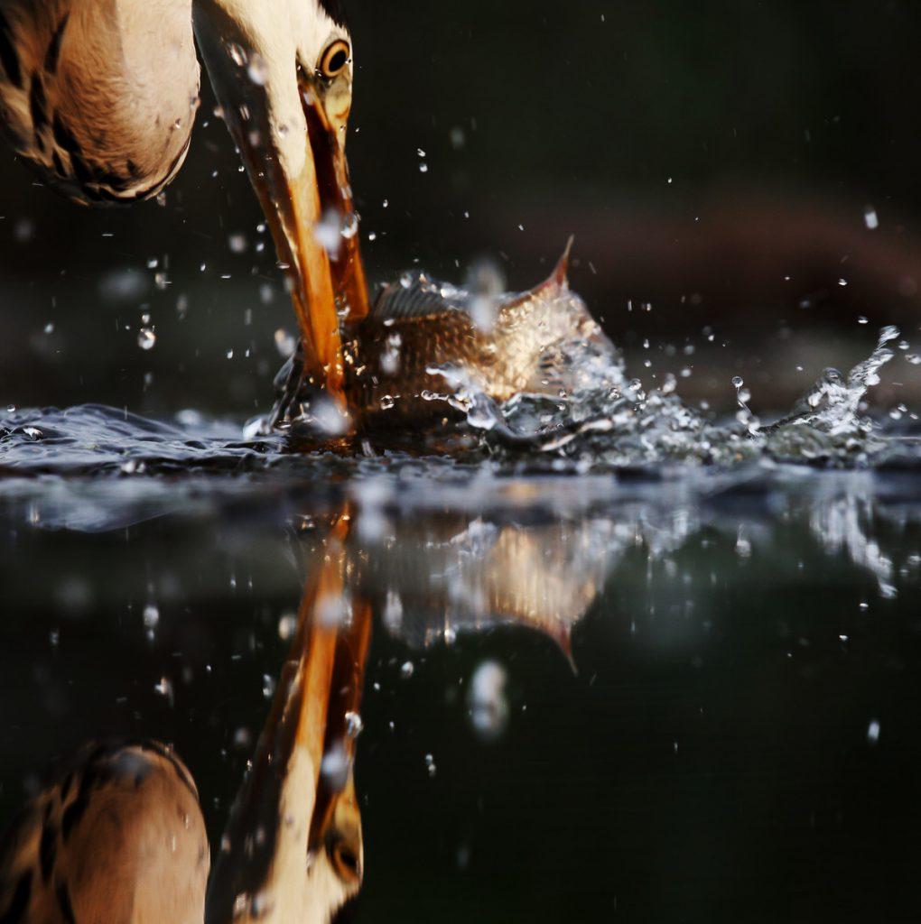 """""""Fange fisk"""" - foto: Ulla Spansdahl"""